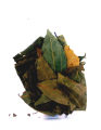 10g Indian Bay Leaves (Indian Tej Patta Leaf)